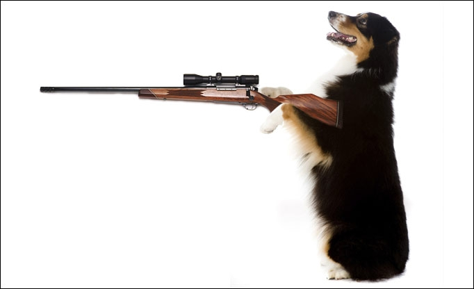 Dog Shoots Man!