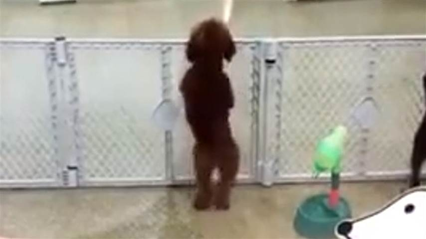 Daycare dog does happy dance when owner arrives [VIDEO]