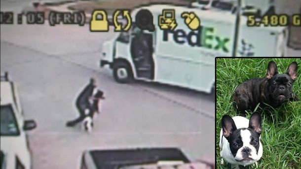 Fedex Driver Caught On Camera Stealing Puppies [VIDEO]